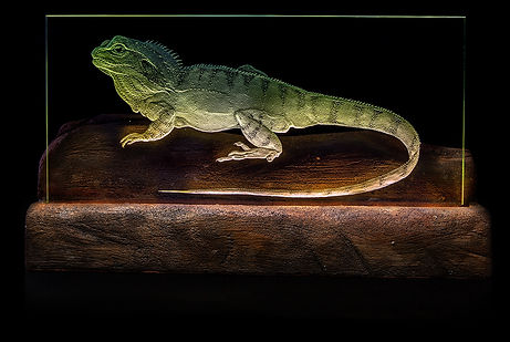 Dragon Lizard.jpg