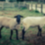 Bully_Boy_Farm_Selects_-3.jpg