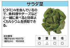 サラダ菜 .jpg