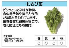 わさび菜 .jpg