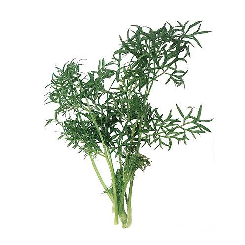 種子セット(細葉パクチー)