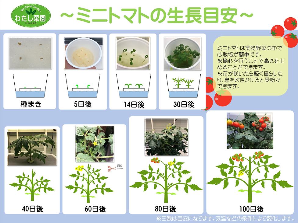 ミニトマト生長目安.png