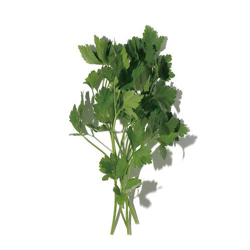 種子セット(イタリアンパセリ)