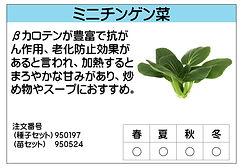 ミニチンゲン菜 .jpg