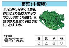 菊菜 .jpg