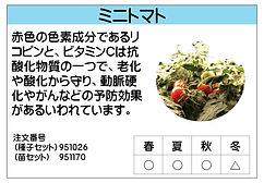 ミニトマト .jpg