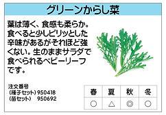 グリーンからし菜 .jpg