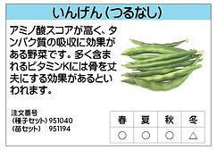 いんげん(つるなし) .jpg