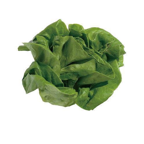 種子セット(サラダ菜)