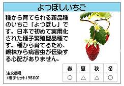 よつぼしいちご .jpg