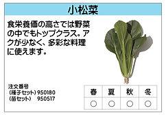 小松菜 .jpg