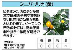 ミニパプリカ(黄) .jpg