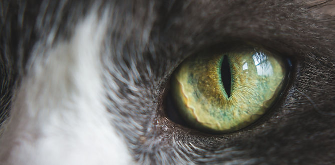 green-cat-eye_edited.jpg
