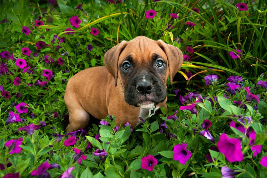 flower dog.jpg