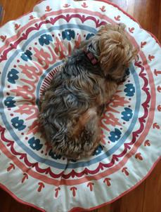 sleepingdog.jpg