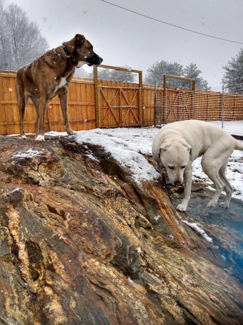 pups snow rock.jpg