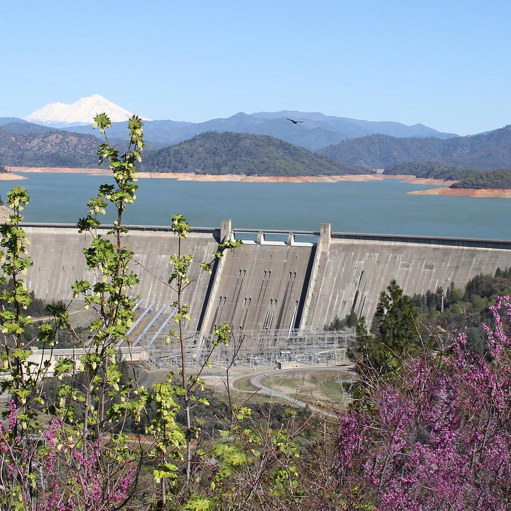 fb Shasta Dam with bird.jpg
