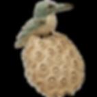 E.BirdonPod_edited.png