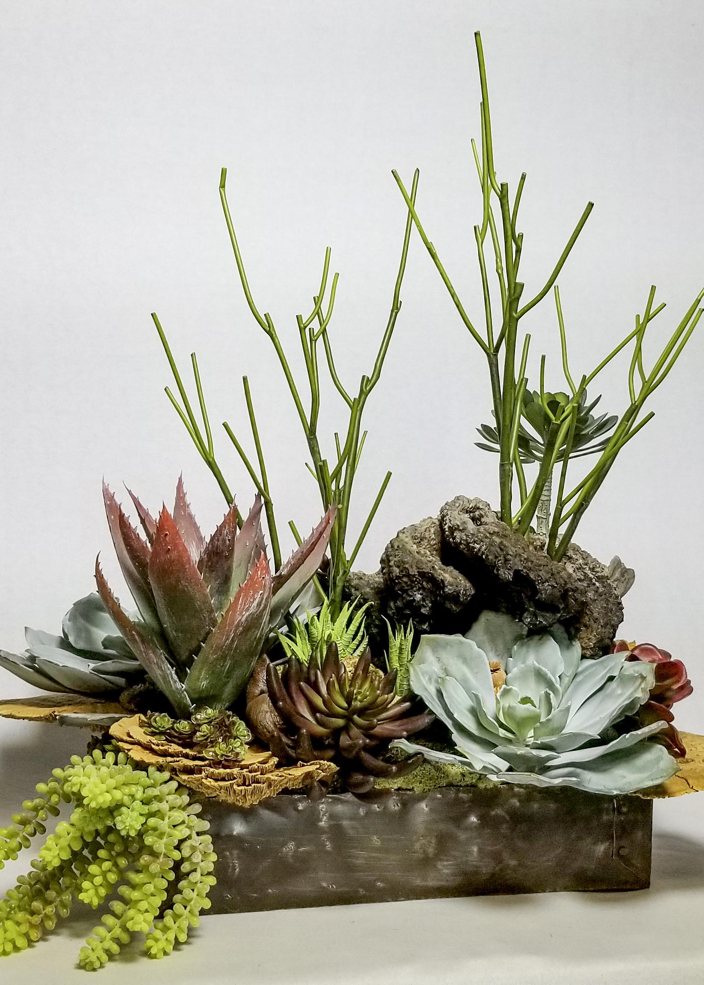 A1.succulent arr in