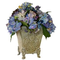 Blue Hydrangea--a Favorite