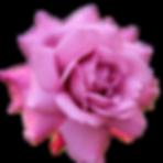 E.Rose.png