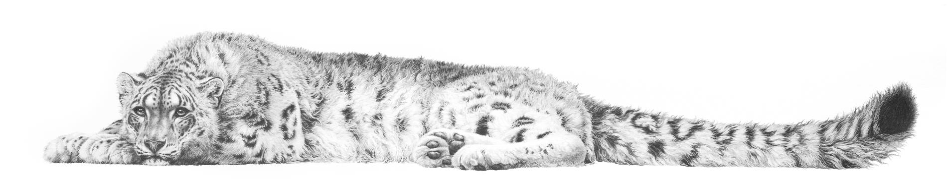 Snow leopard 1993