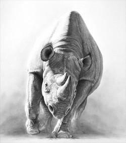 Heat and Dust 1995 (rhino)