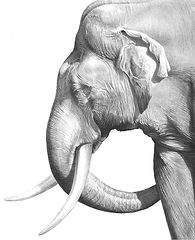 Old elephant drawing by Gary Hodges
