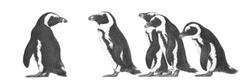 Jackass Penguins 1992