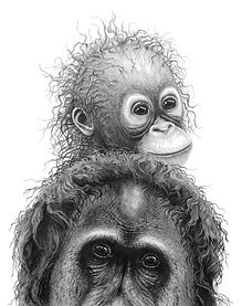 Orangutans by Gary Hodges