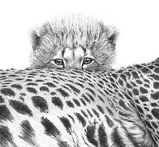Cheetah cub drawing by Gary Hodges