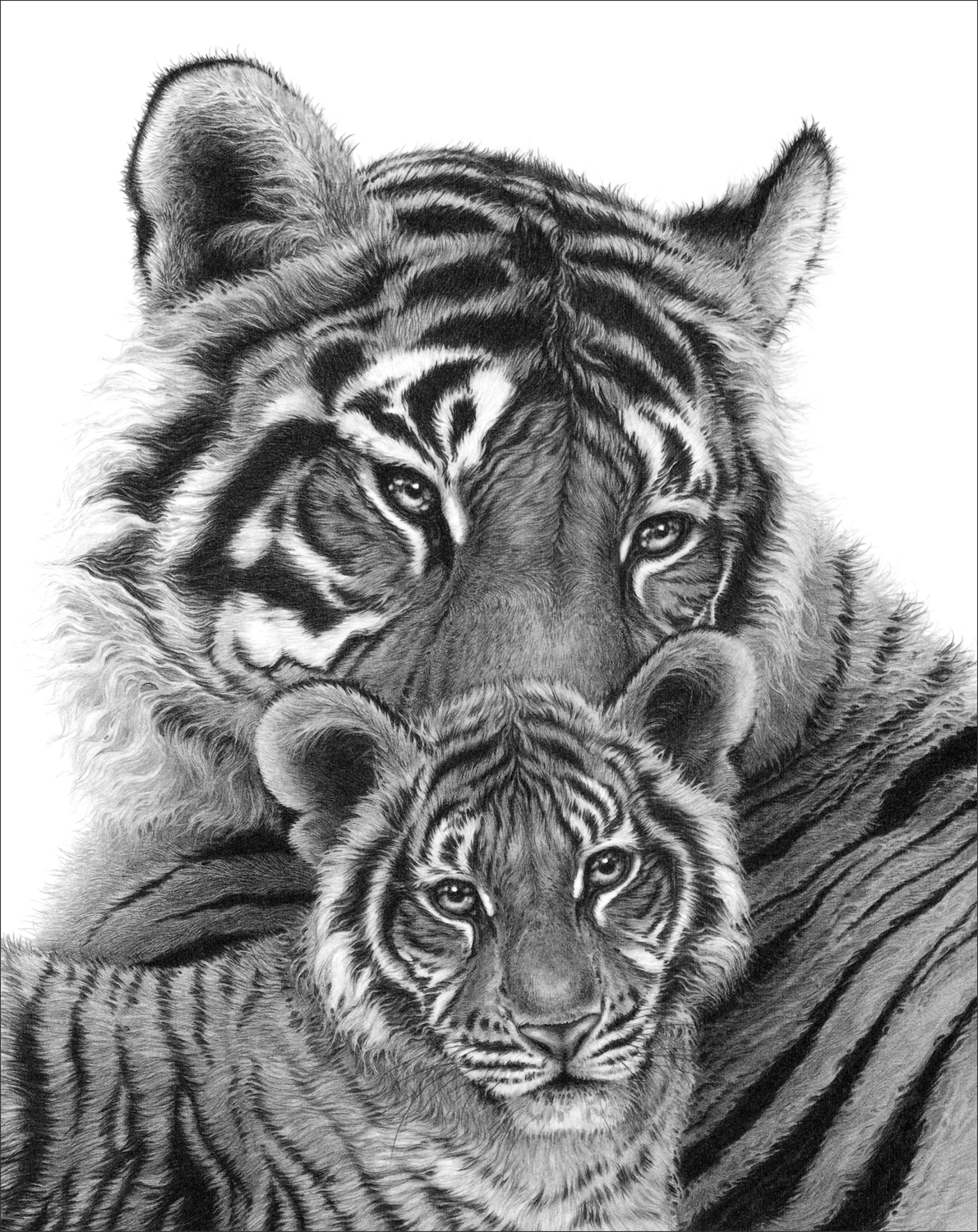 Bengal Tigress & Cub 1994