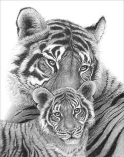 Bengal Tigress & Cub 1994