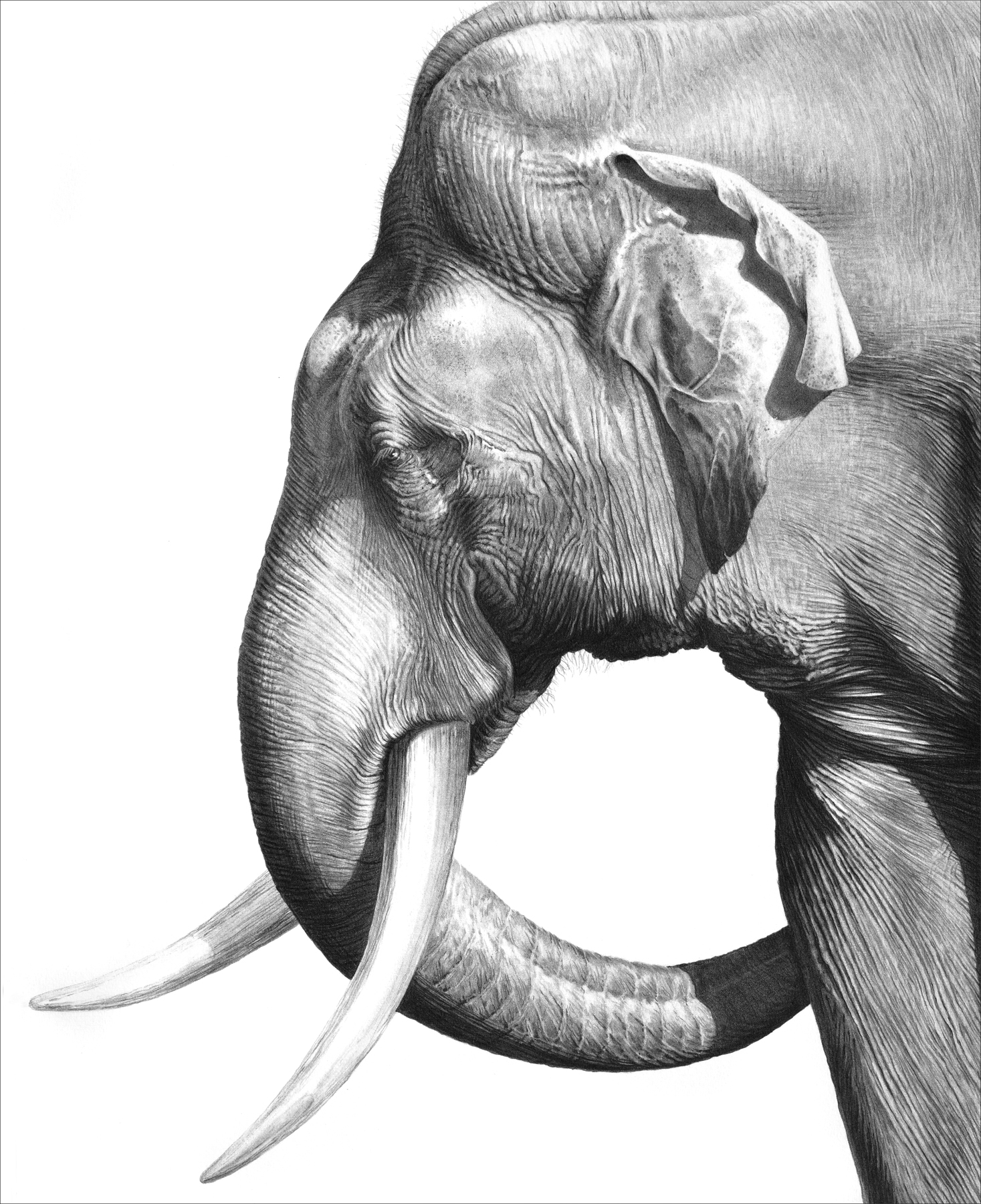 Old Tusker 1996 (Asian elephant)