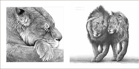 Page spread of lions from wildlife artist Gary Hodges book Heart and Soul including Boy and Christian from Born Free