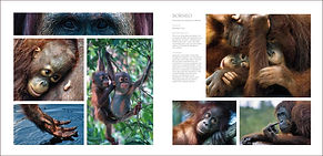 Photos and information by wildlife artist Gary Hodges