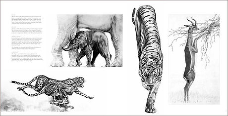 Page spread of elephants cheetahs tiger and gerenuk in wildlife artist Gary Hodges book Heart and Soul