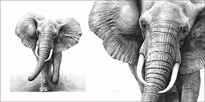 Elephant drawings by wildlife artist Gary Hodges