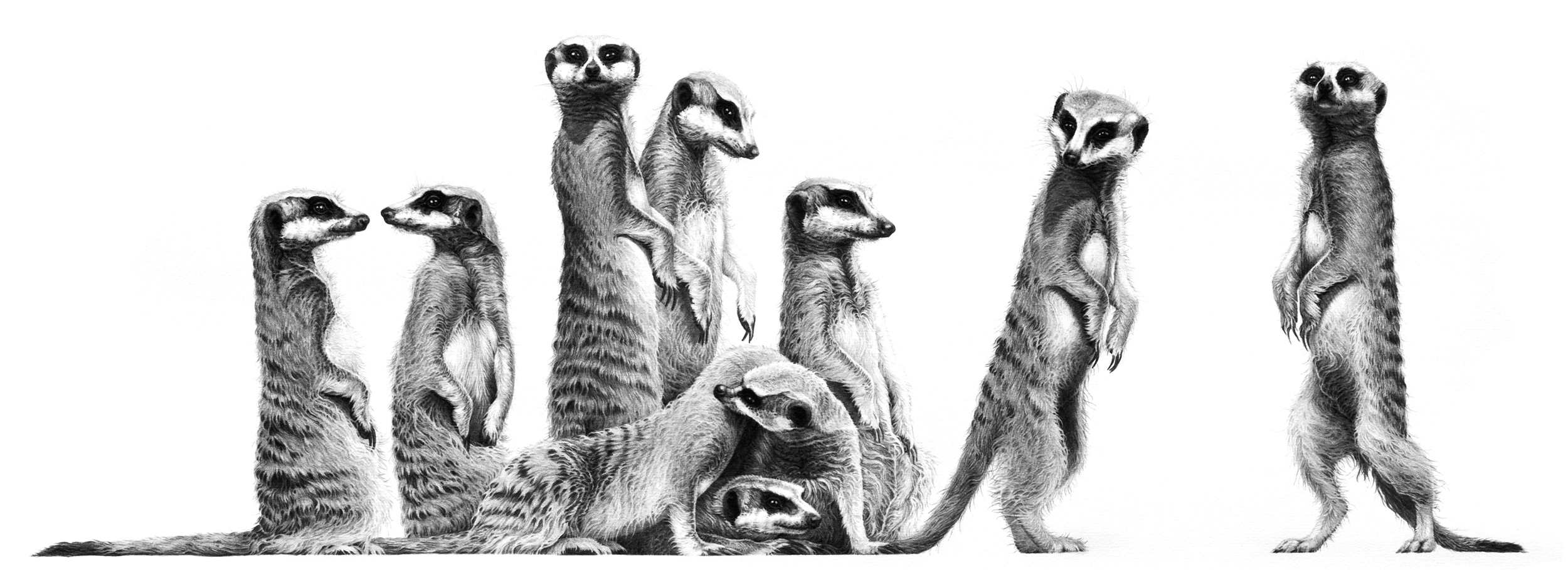 Family 2005 (meercats)