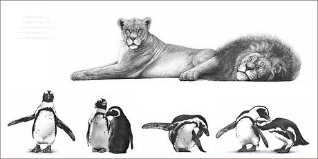 Page spread of lions and penguins from portfolio section of wildlife artist Gary Hodges autobiography Heart and Soul