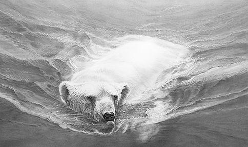 Swimming Polar Bear BF_web.jpg