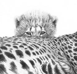 Cheetah cub 1994