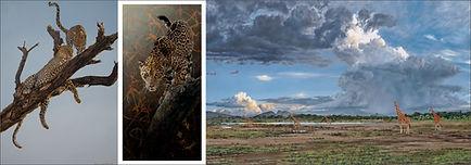 Guy Combes African wildlife