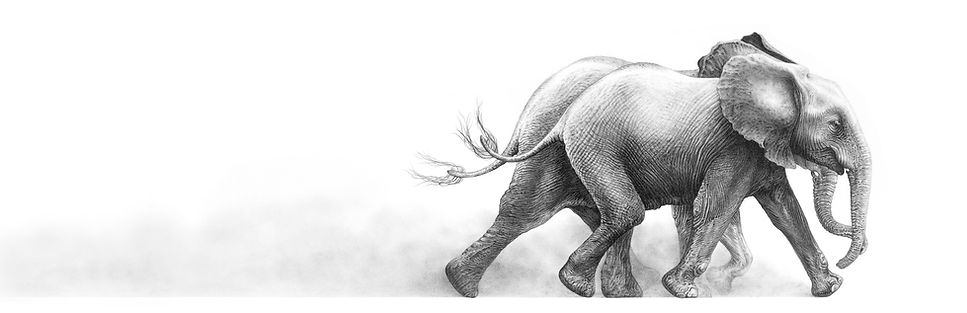 Pencil drawing of orphaned elephants released into the wild