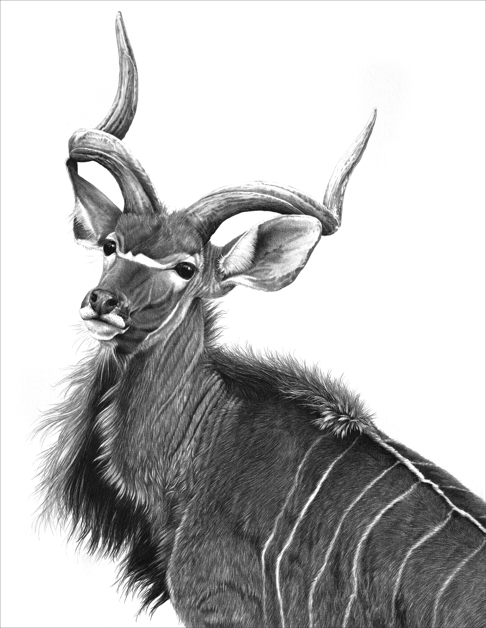 Greater kudu 1995