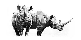 Old black rhino drawing by Gary Hodges