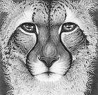 Cheetah by Gary Hodges