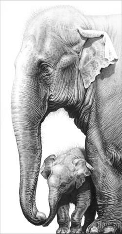 Touching 2012 (Asian elephants)