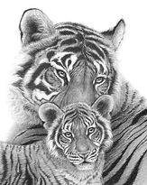 Tigers by Gary Hodges