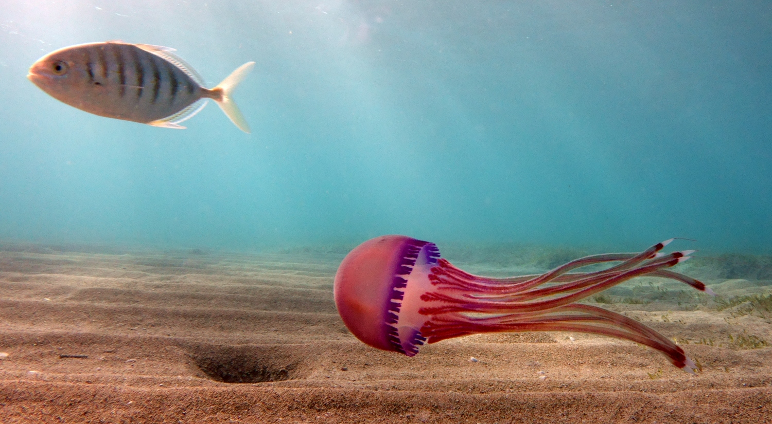 Jellyfish by Dave Currey